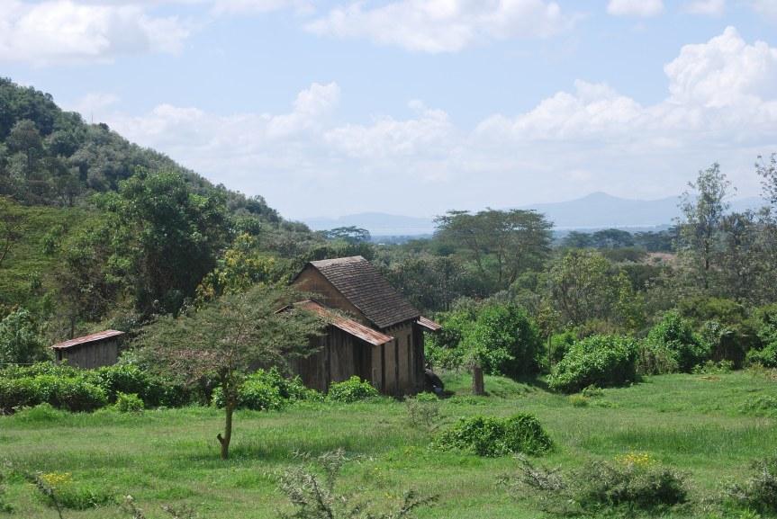 at the Malu shamba (farm)